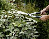 Mantenimiento básico del jardín paso 1