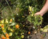 Flores de primavera en parterre - Paso 1