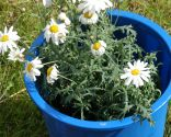 Flores de primavera en parterre - Paso 7