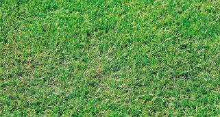 abonar y regenerar el csped tras el invierno