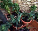 Cultivar hortalizas en contenedor