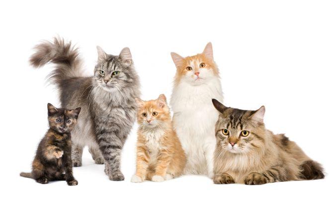 Gatos informaci n completa sobre los gatos y su cuidado for Ahuyentar gatos del jardin