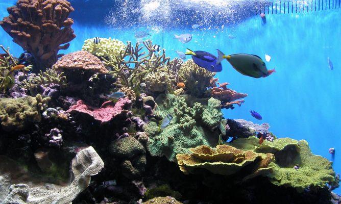 Antes de comprar un acuario hogarmania for Mejores peces para acuario