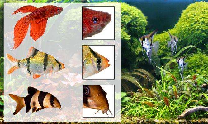 Alimentación de los peces según su anatomía - Hogarmania