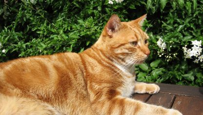 5 dudas sobre la castraci n en gatos decogarden - Alimento para gatos esterilizados ...