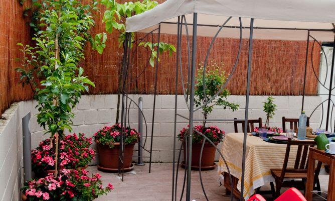 Rboles frutales en la terraza hogarmania - Como plantar arboles frutales ...