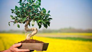 Cultivo de los bonsáis