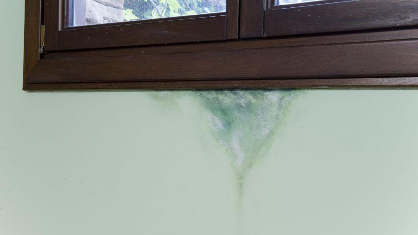 Como quitar las manchas de humedad de las paredes - Manchas de humedad ...