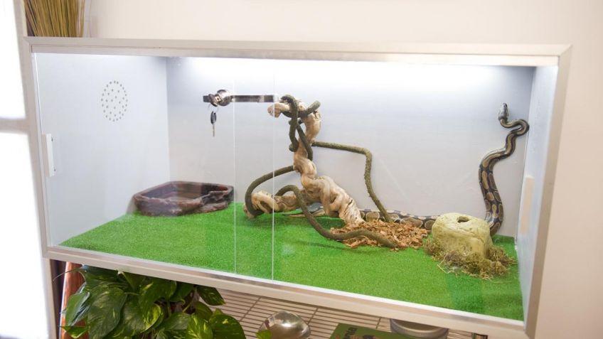 Cómo construir un terrario - Bricomanía