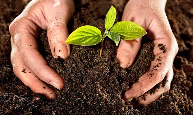 Caracter sticas del terreno hogarmania for Suelos de jardin