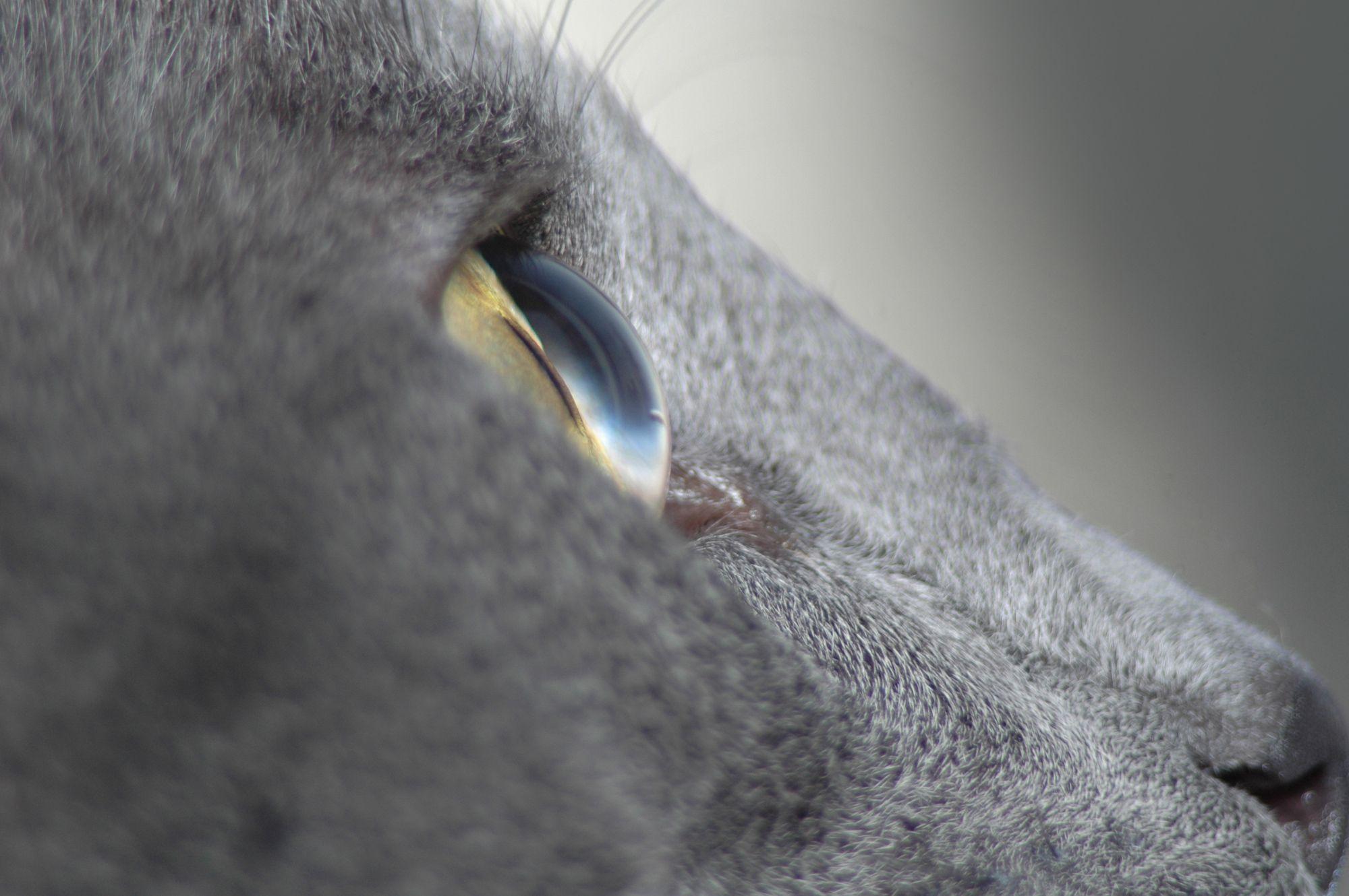 visión gatos