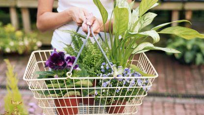 Plantas de interior muy resistentes hogarmania - Comprar plantas de interior ...