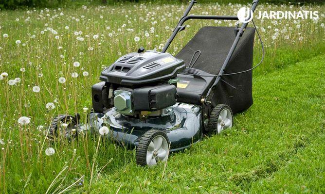 Cuidados del c sped en primavera bricoman a - Bricomania jardineria ...
