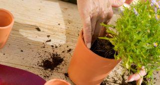 Cultivo de plantas aromáticas I