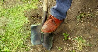 Acabar con las plantas adventicias ex malas hierbas for Como quitar la mala hierba del jardin