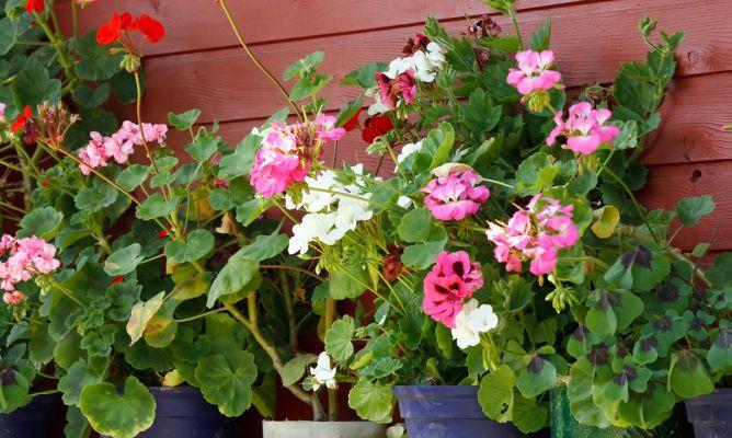 Flores de verano para el balc n decogarden - Macetas para balcones ...