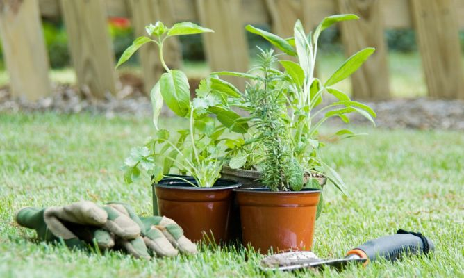 Jard n vertical con plantas arom ticas bricoman a for Jardin vertical cocina