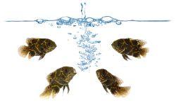 limpieza acuario
