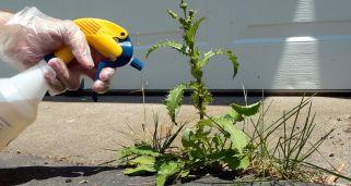 Eliminar malas hierbas bricoman a for Como quitar la mala hierba del jardin