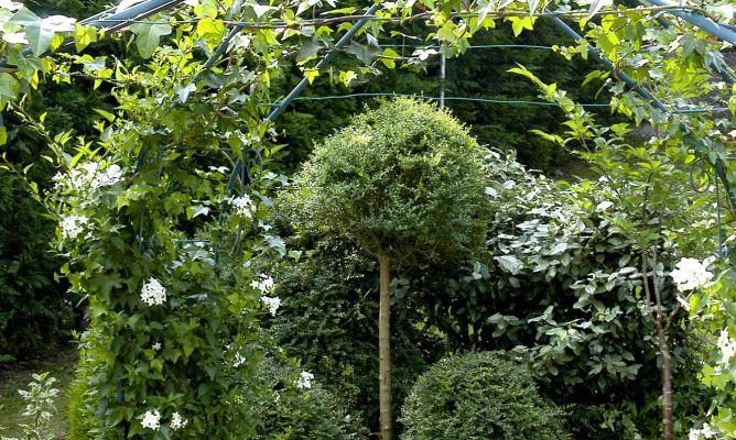 Mantenimiento b sico del jard n bricoman a for Bricomania jardin