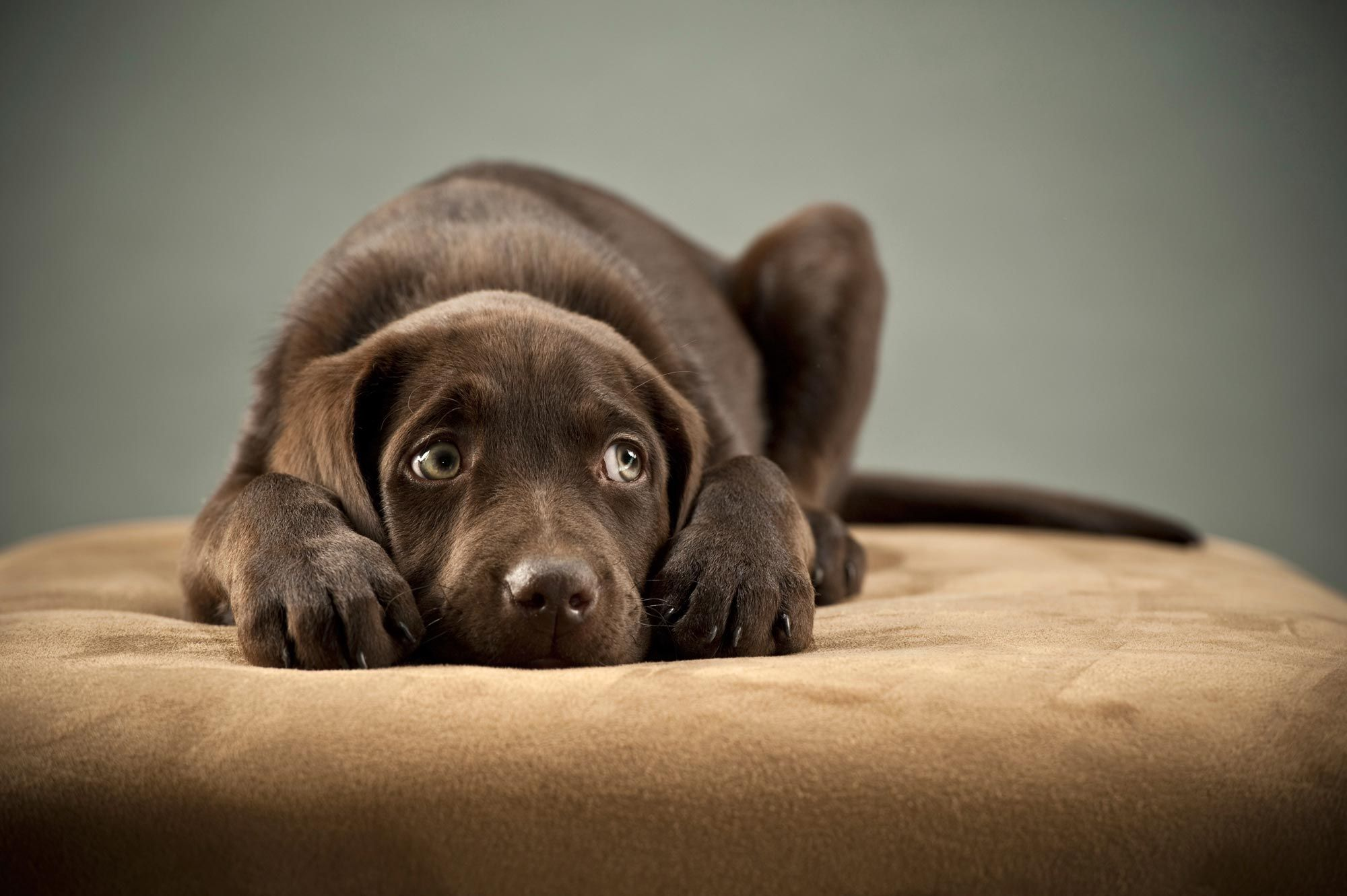 perros miedo ruido