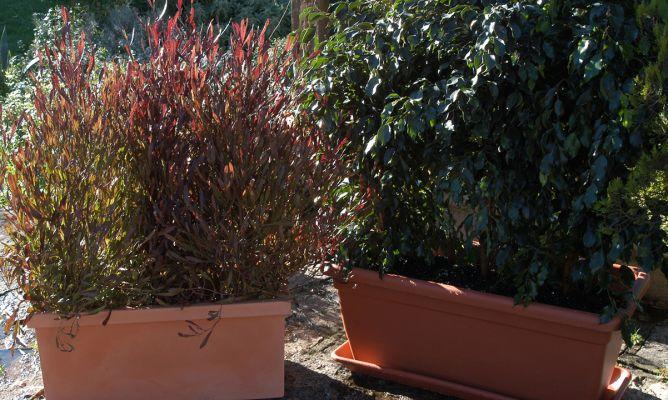 Pantallas vegetales para jardineras bricoman a - Cierres de jardin ...