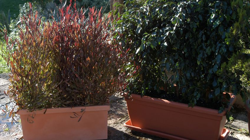 Pantallas vegetales para jardineras Bricomana
