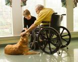 perros terapia niños discapacidad
