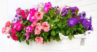 Plantas de temporada oto o invierno para terraza y balc n for Flores artificiales leroy merlin