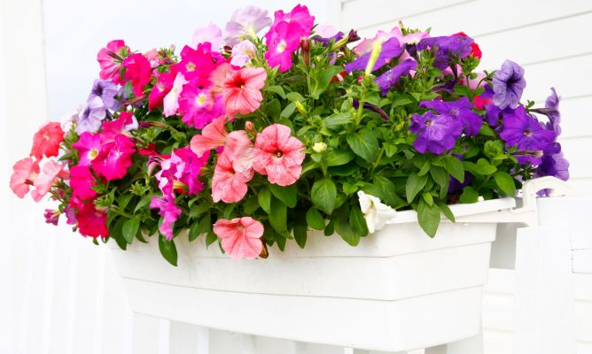 Plantas de temporada para terraza y balc n hogarmania - Maceteros colgantes para balcones ...