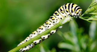 Remedios para combatir las hormigas del jardín - Hogarmania