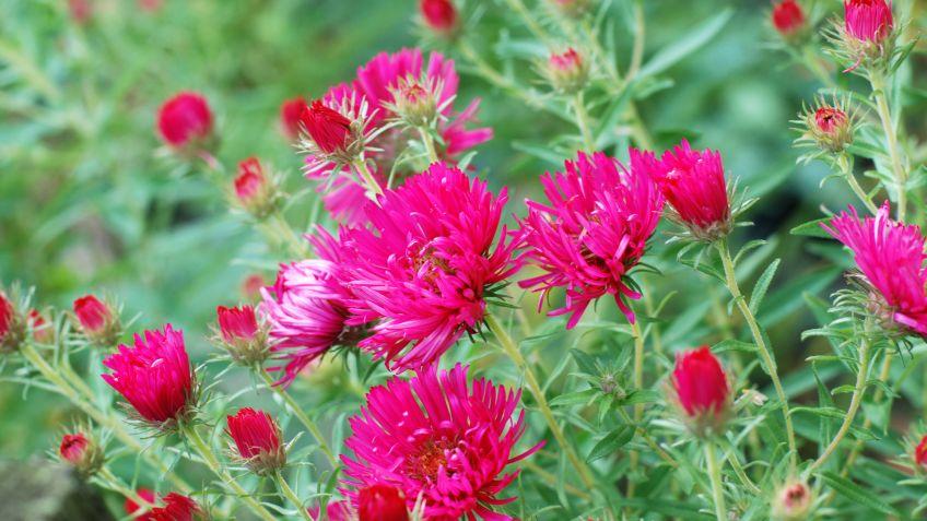 10 Plantas Para Poner Al Sol Hogarmania