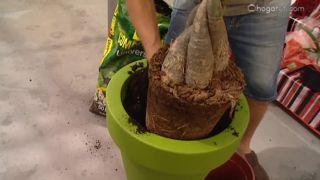 Plantas con troncos decorativos