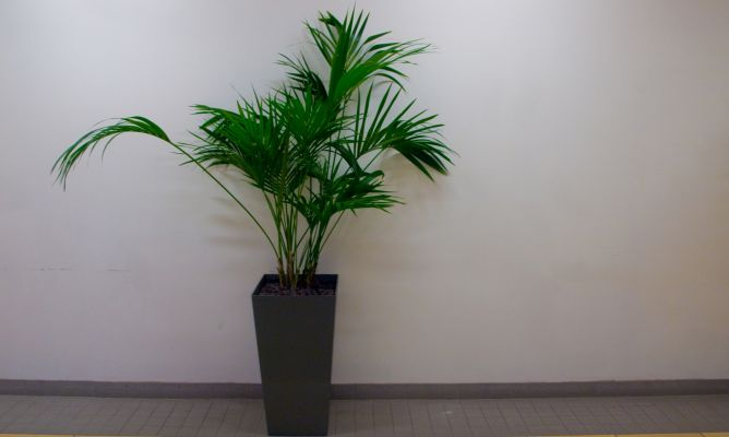 Plantas para decorar un hall sin luz natural decogarden - Luz para plantas de interior ...
