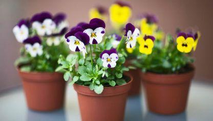 15 Plantas Pequenas Con Encanto Hogarmania - Centros-de-mesa-con-plantas-naturales