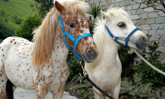 Poni o caballo miniatura decogarden for Jardines de poni
