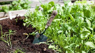 Preparar el huerto para plantar hortalizas