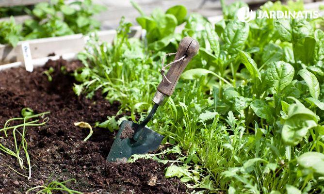 Preparar el huerto para plantar hortalizas bricoman a for Preparar el huerto en invierno