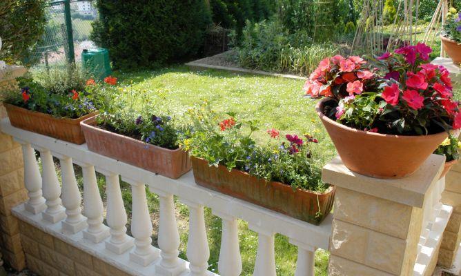 Puesta a punto de las flores del balc n decogarden - Plantas para terrazas con mucho sol ...