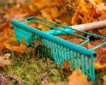 Retirar las hojas