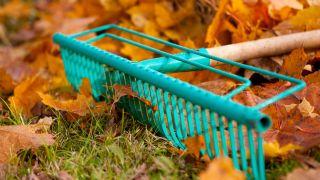 Recoger hojas en otoño