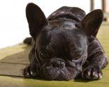 Alimentación para perros de piel sensible