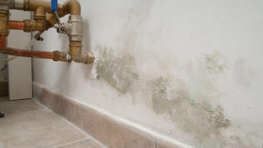Como quitar humedad affordable cmo quitar el olor a - Quitar manchas humedad pared ...