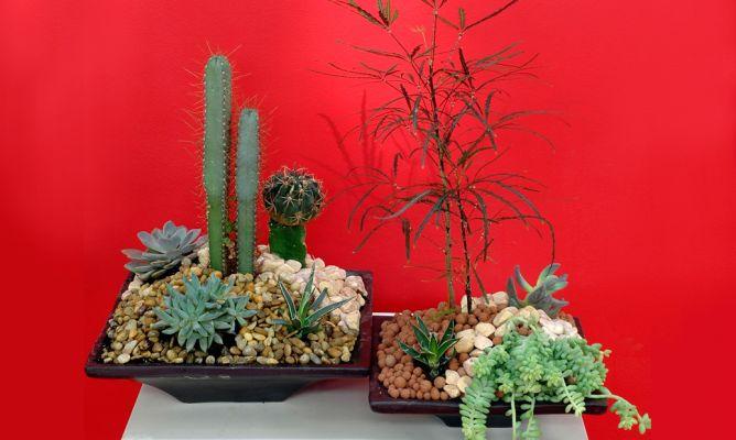 Centro de mesa con plantas crasas decogarden - Centros de plantas naturales ...