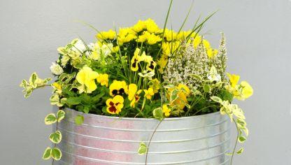 Tipos de crisantemo decogarden - Como cultivar crisantemos ...