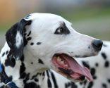Alimentación especial para perros con sobrepeso