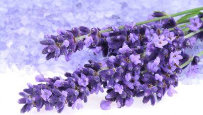 Lavanda Planta Medicinal De Propiedades Calmantes Hogarmania