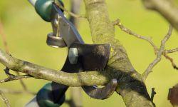 Podar árboles frutales