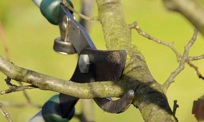 Podar rboles frutales bricoman a - Cuando se plantan los arboles frutales ...