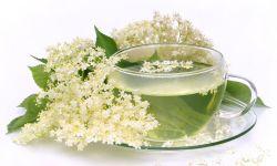 flord e saúco - planta resfriados y tos